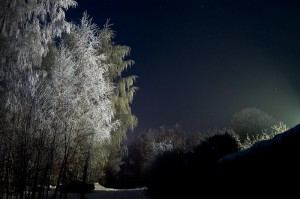 trees_ain__t_sleep_at_night_2_by_ygnaz
