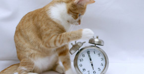 alarm-clock-kitty-how-to-stop-early-morning-meowing