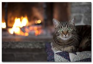 cat-by-fire